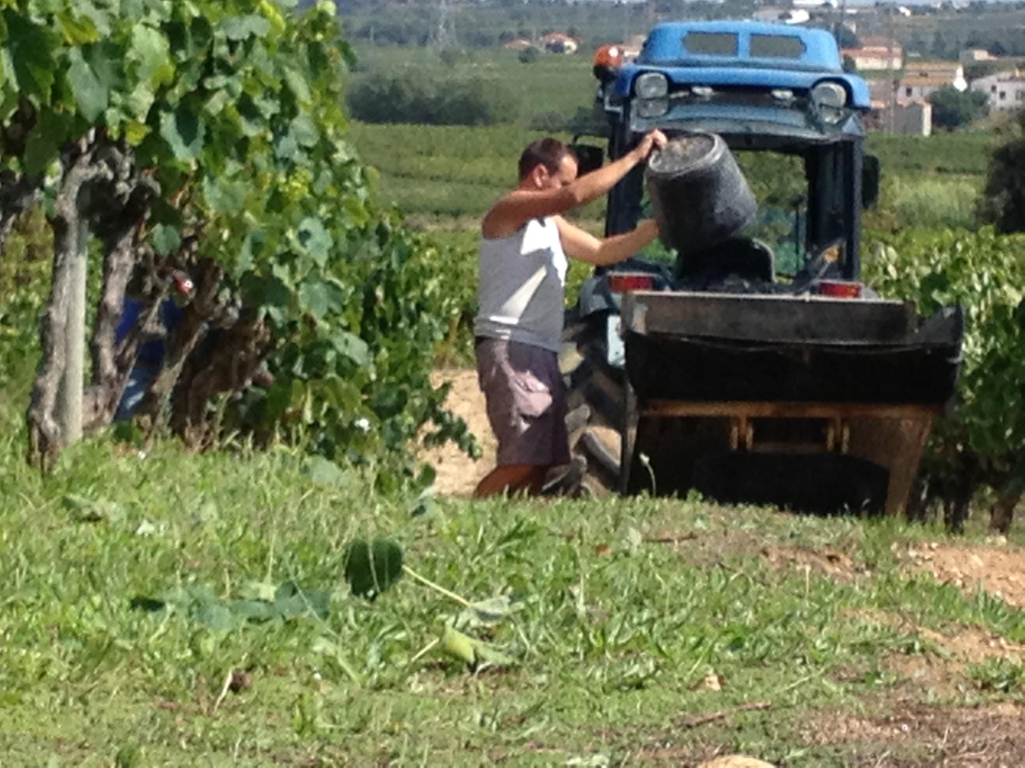 Harvest Colet Wines