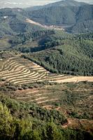 Vista des del puig de Sant Vicenç